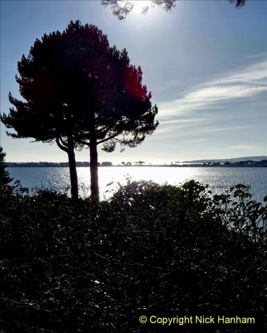 2021-01-15 Covid 19  Walk 2021 Evening Hill - Poole Quay - Trees. (2) 002