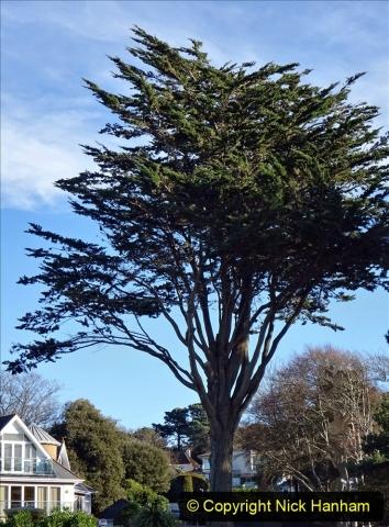 2021-01-15 Covid 19  Walk 2021 Evening Hill - Poole Quay - Trees. (20) 020