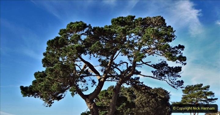 2021-01-15 Covid 19  Walk 2021 Evening Hill - Poole Quay - Trees. (22) 022