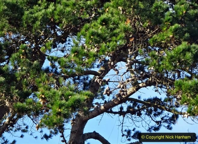 2021-01-15 Covid 19  Walk 2021 Evening Hill - Poole Quay - Trees. (26) 026