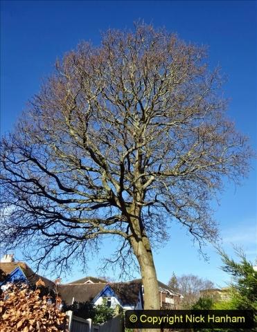 2021-01-15 Covid 19  Walk 2021 Evening Hill - Poole Quay - Trees. (27) 027