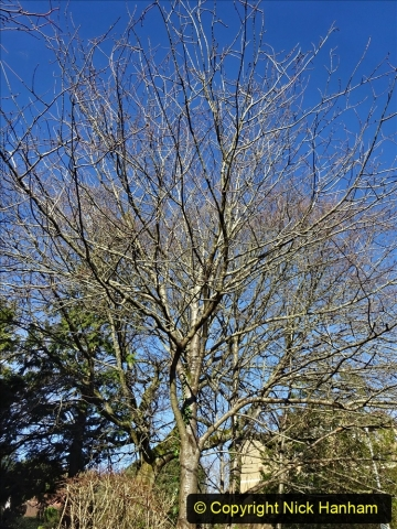 2021-01-15 Covid 19  Walk 2021 Evening Hill - Poole Quay - Trees. (28) 028