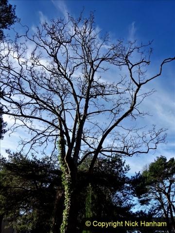 2021-01-15 Covid 19  Walk 2021 Evening Hill - Poole Quay - Trees. (30) 030