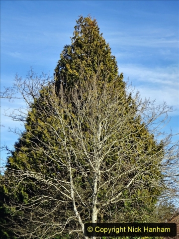 2021-01-15 Covid 19  Walk 2021 Evening Hill - Poole Quay - Trees. (31) 031