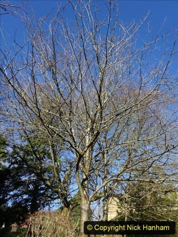 2021-01-15 Covid 19  Walk 2021 Evening Hill - Poole Quay - Trees. (32) 032
