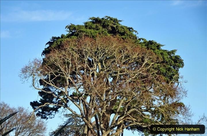 2021-01-15 Covid 19  Walk 2021 Evening Hill - Poole Quay - Trees. (33) 033