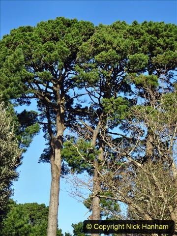 2021-01-15 Covid 19  Walk 2021 Evening Hill - Poole Quay - Trees. (34) 034