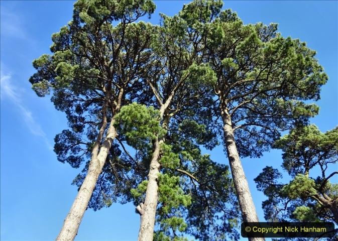2021-01-15 Covid 19  Walk 2021 Evening Hill - Poole Quay - Trees. (35) 035