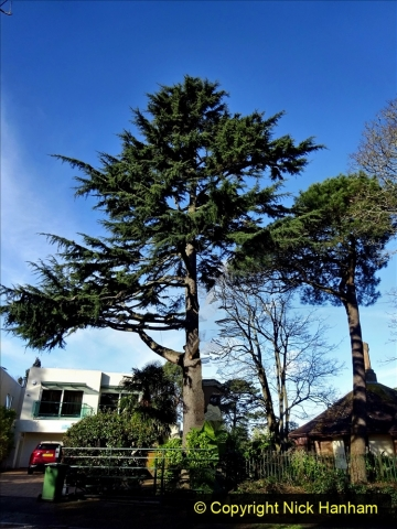 2021-01-15 Covid 19  Walk 2021 Evening Hill - Poole Quay - Trees. (36) 036