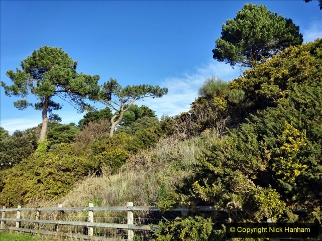 2021-01-15 Covid 19  Walk 2021 Evening Hill - Poole Quay - Trees. (8) 008