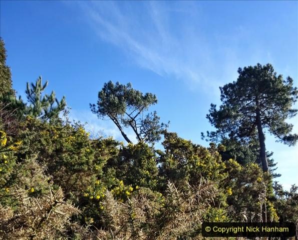 2021-01-15 Covid 19  Walk 2021 Evening Hill - Poole Quay - Trees. (9) 009