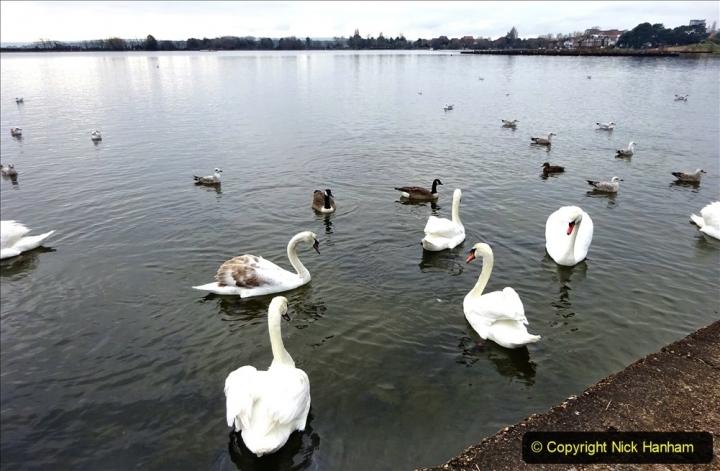2021-02-01 Covid 19 Walk - Poole Park completed refurbishment. (41) 41