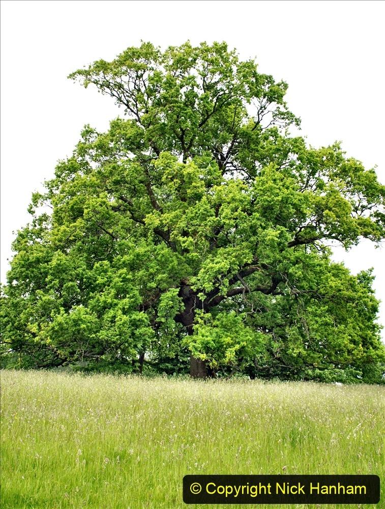 2021-06-10 The Vyne (National Trust) near Basingstoke, Hampshire. (13) 013