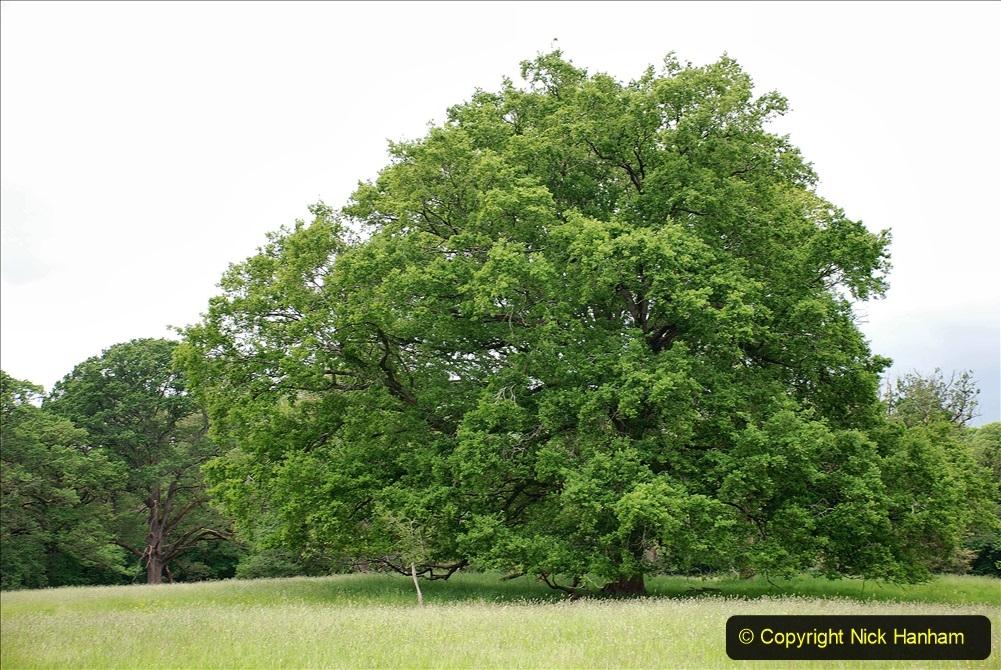 2021-06-10 The Vyne (National Trust) near Basingstoke, Hampshire. (14) 014