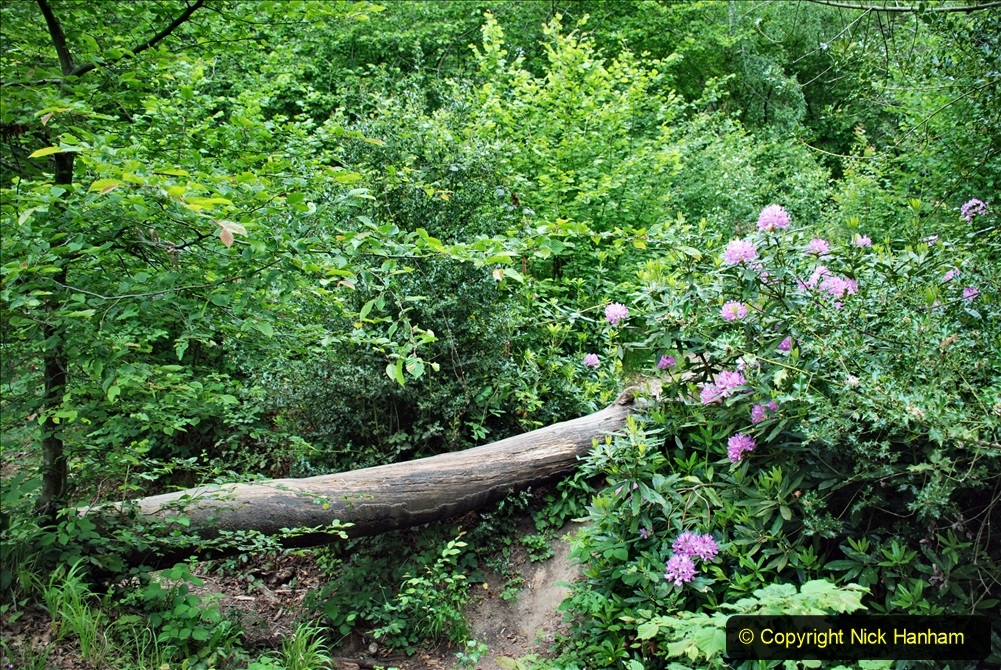 2021-06-10 The Vyne (National Trust) near Basingstoke, Hampshire. (25) 025
