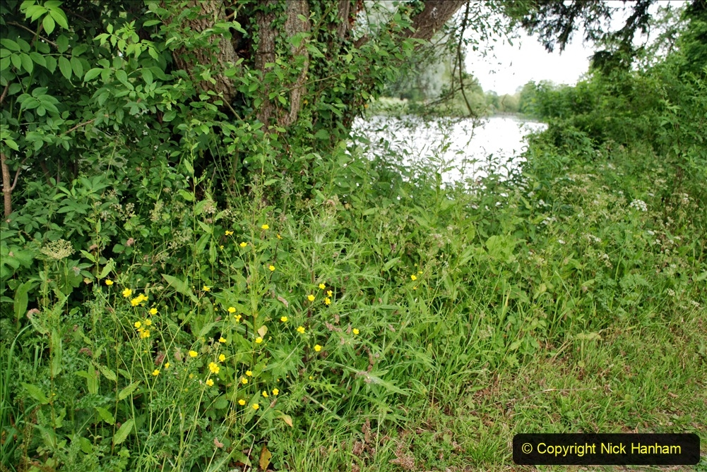 2021-06-10 The Vyne (National Trust) near Basingstoke, Hampshire. (30) 030