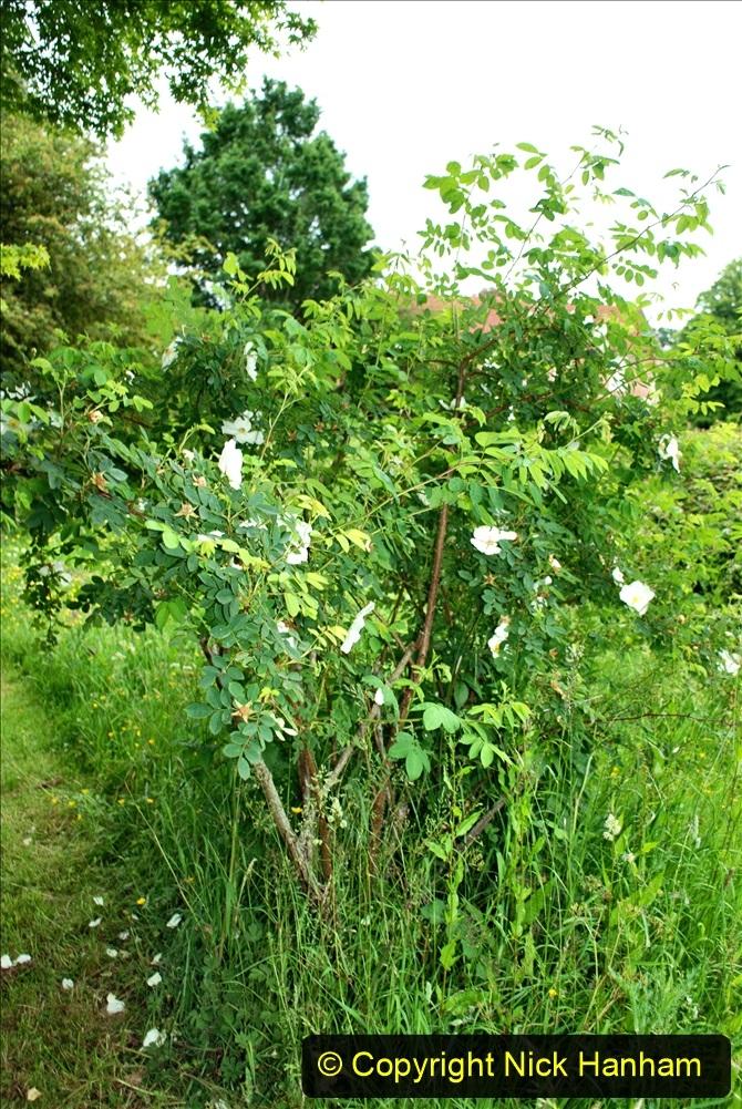 2021-06-10 The Vyne (National Trust) near Basingstoke, Hampshire. (38) 038