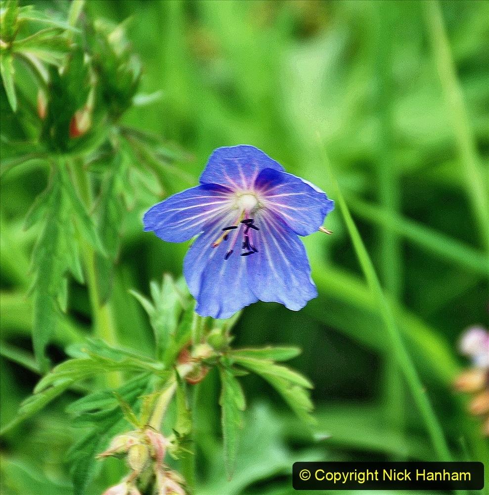 2021-06-10 The Vyne (National Trust) near Basingstoke, Hampshire. (42) 042