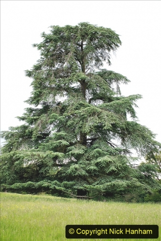 2021-06-10 The Vyne (National Trust) near Basingstoke, Hampshire. (12) 012