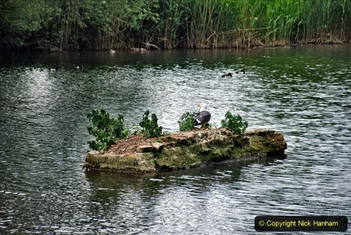 2021-06-10 The Vyne (National Trust) near Basingstoke, Hampshire. (23) 023