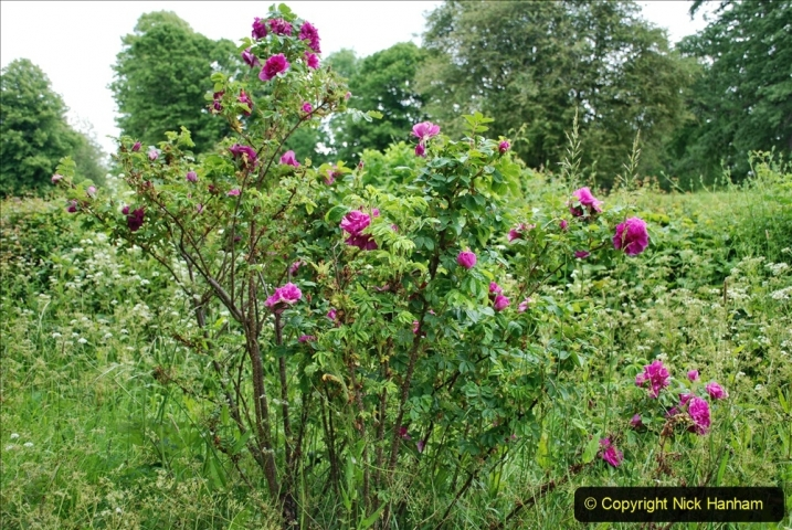 2021-06-10 The Vyne (National Trust) near Basingstoke, Hampshire. (37) 037