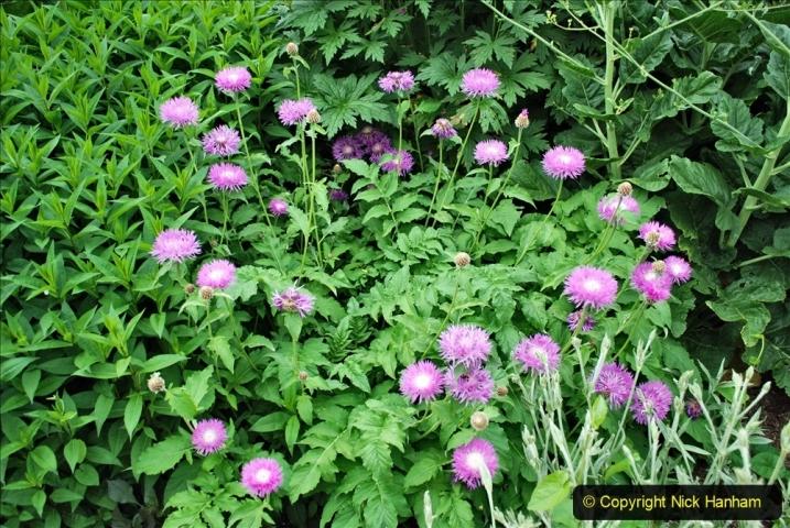 2021-06-10 The Vyne (National Trust) near Basingstoke, Hampshire. (52) 052
