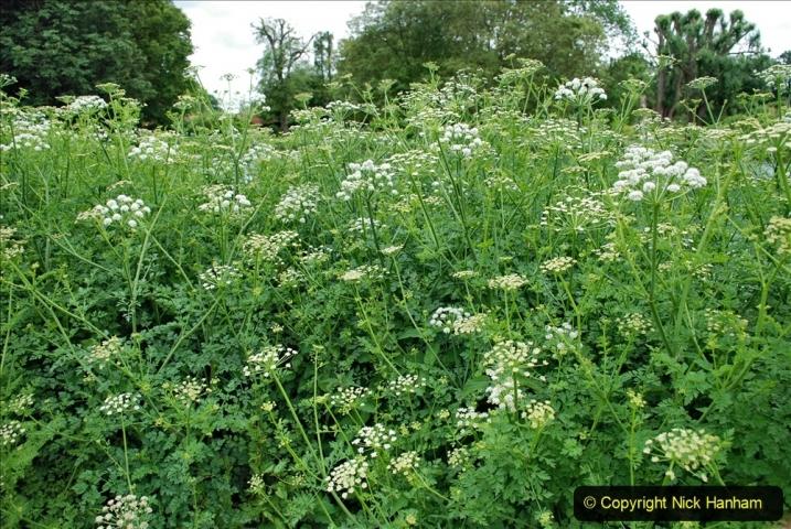2021-06-10 The Vyne (National Trust) near Basingstoke, Hampshire. (9) 009