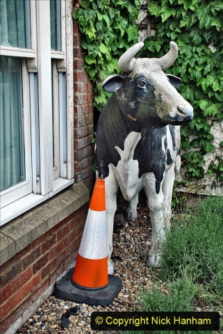 2021-06-10 to 12 Thame, Oxfordshire. (15) One of the meny cows in Thame. 113