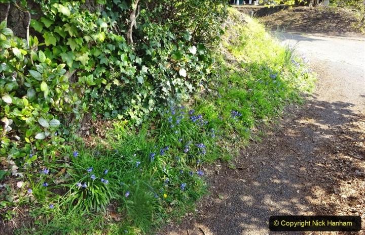 2021-05-01 Local Covid 19 Walk Poole, Dorset. (65) 065