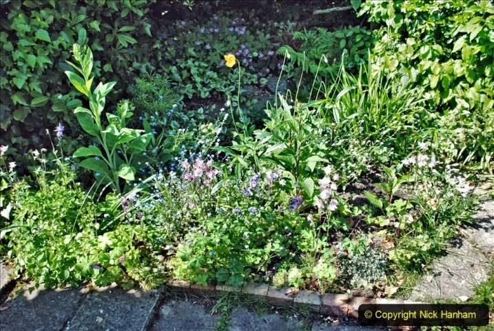 2021-05-31 A Poole garden in late Spring. (88) 088