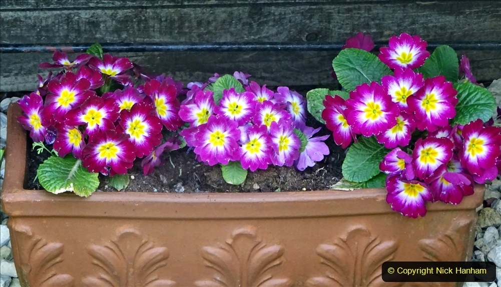 2021-04-04 A Poole garden in Spring. (12) 012
