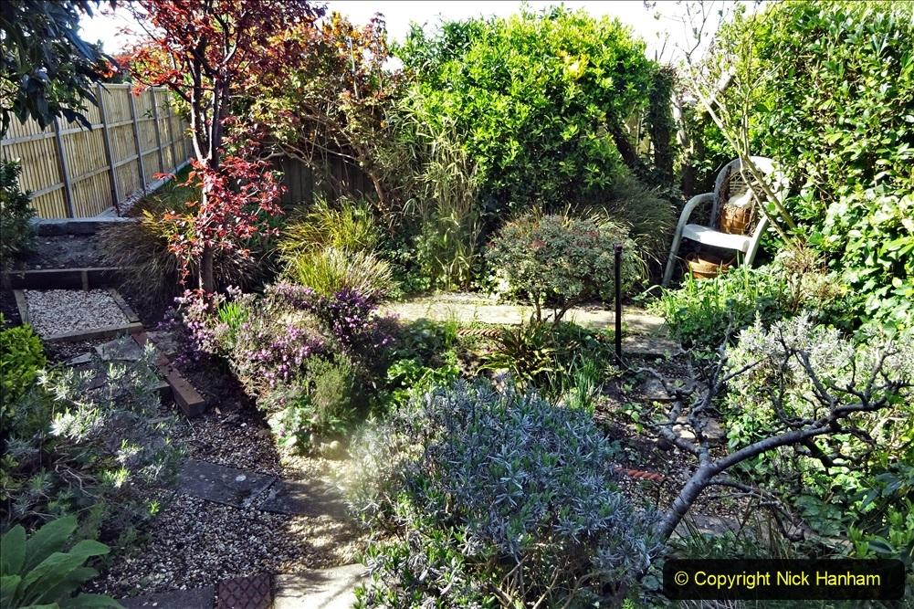 2021-04-04 A Poole garden in Spring. (13) 013