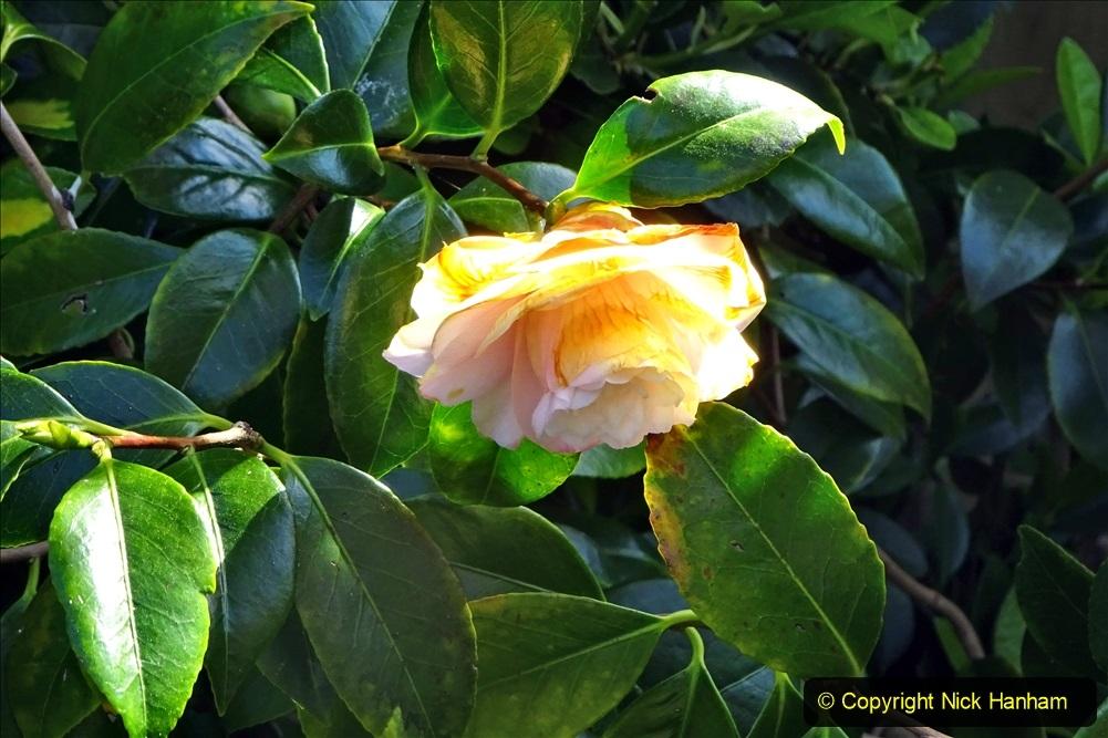 2021-04-04 A Poole garden in Spring. (19) 019