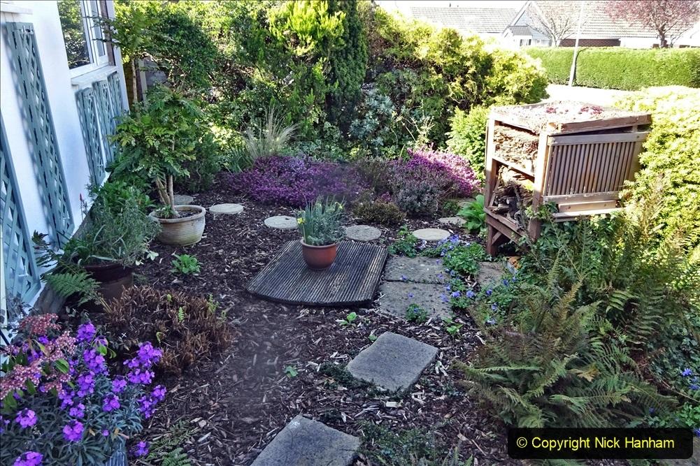 2021-04-04 A Poole garden in Spring. (2) 002