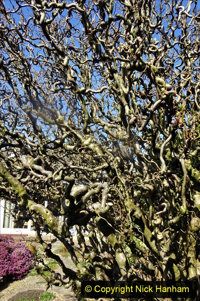 2021-04-04 A Poole garden in Spring. (24) 024