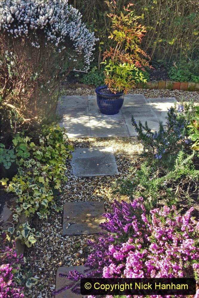 2021-04-04 A Poole garden in Spring. (27) 027