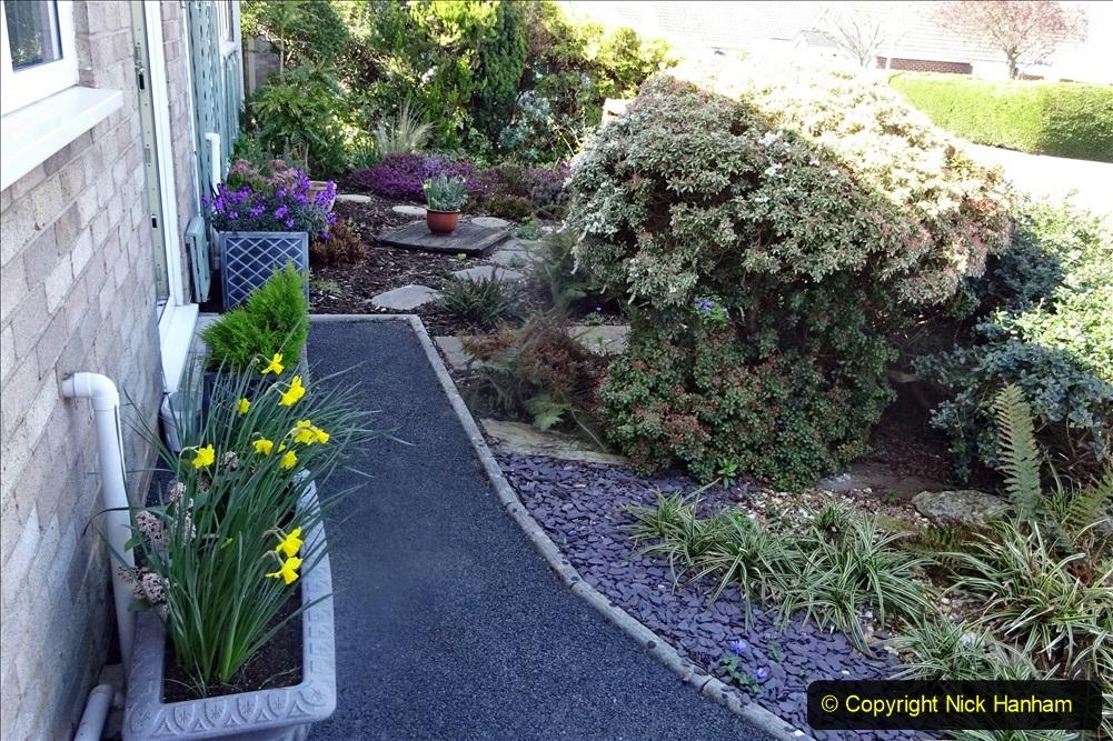 2021-04-04 A Poole garden in Spring. (3) 003