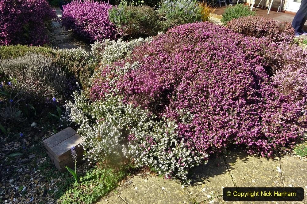 2021-04-04 A Poole garden in Spring. (35) 035