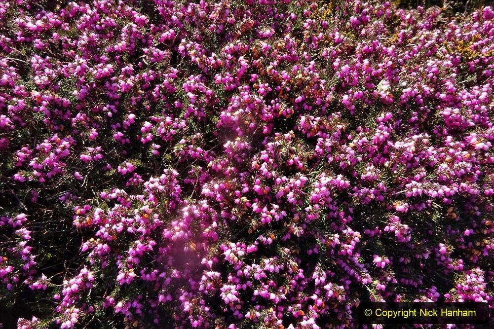 2021-04-04 A Poole garden in Spring. (45) 045