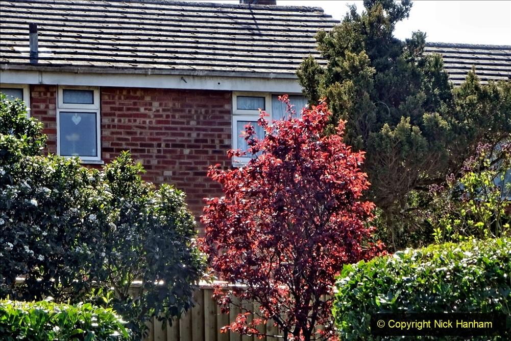2021-04-04 A Poole garden in Spring. (50) 050