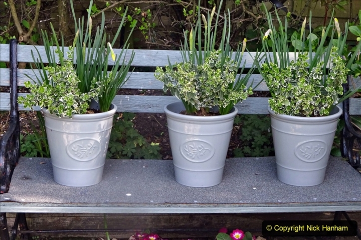 2021-04-04 A Poole garden in Spring. (11) 011