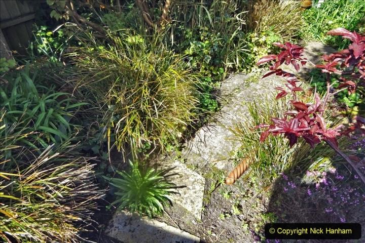 2021-04-04 A Poole garden in Spring. (15) 015