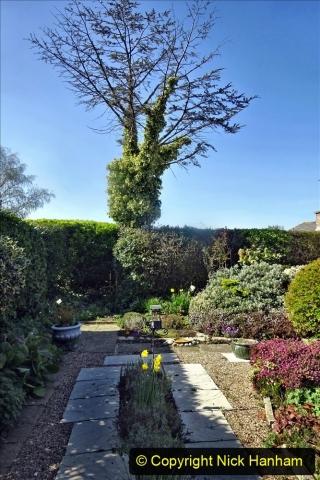 2021-04-04 A Poole garden in Spring. (23) 023