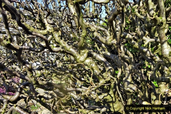 2021-04-04 A Poole garden in Spring. (25) 025