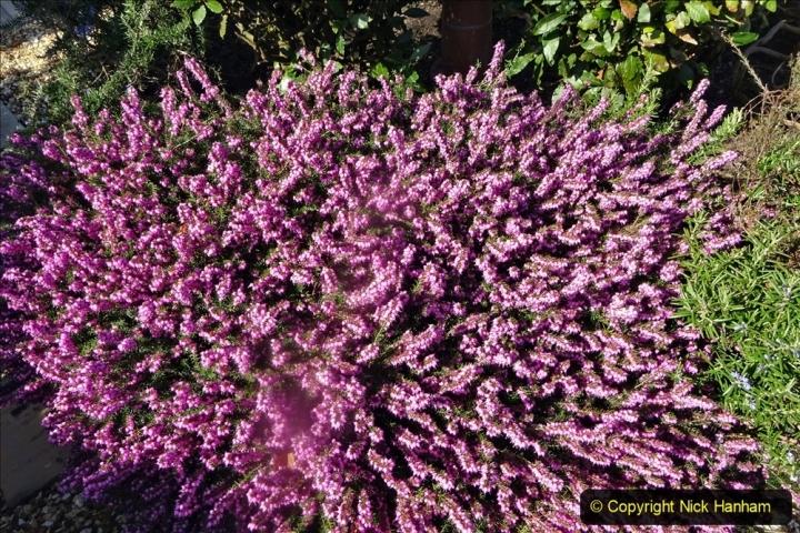 2021-04-04 A Poole garden in Spring. (26) 026