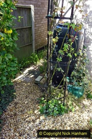 2021-04-04 A Poole garden in Spring. (29) 029