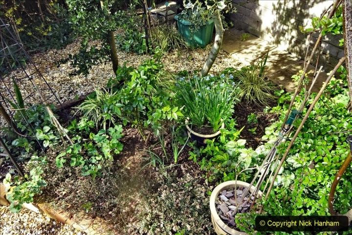 2021-04-04 A Poole garden in Spring. (31) 031