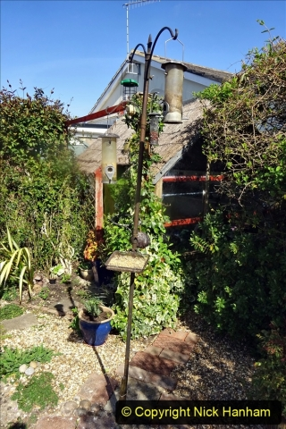 2021-04-04 A Poole garden in Spring. (34) 034