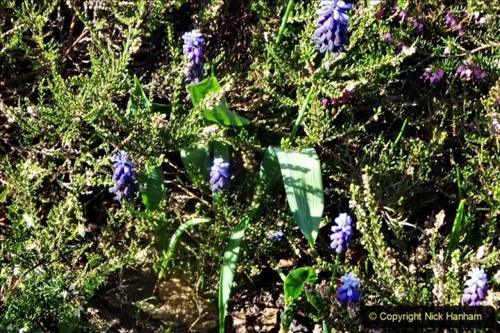 2021-04-04 A Poole garden in Spring. (36) 036