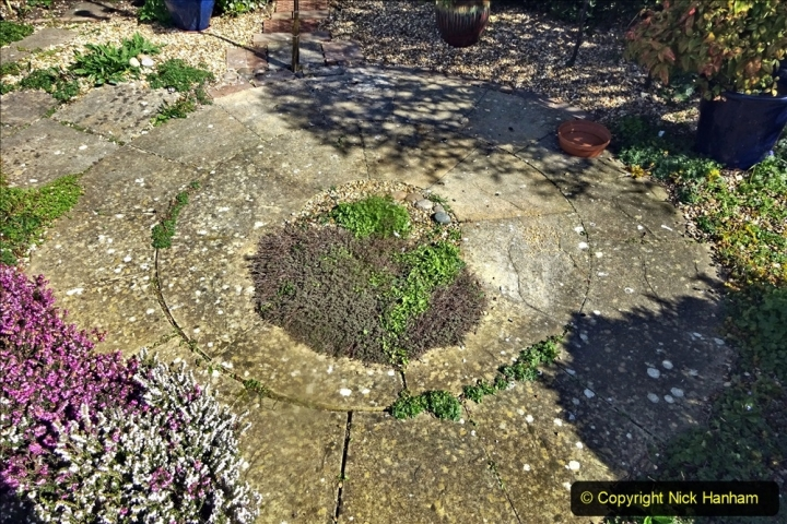 2021-04-04 A Poole garden in Spring. (37) 037